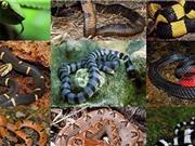 Những loài rắn độc nhất Việt Nam: Cách đơn giản để nhận biết