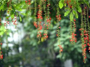 """Cận cảnh vẻ đẹp của loài hoa khiến các """"đại gia"""" phát cuồng"""