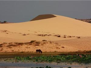 Mướt mắt trước phong cảnh của sa mạc Sahara phiên bản Việt