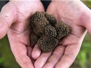 """Bất ngờ phát hiện nấm màu đen có giá trị """"siêu cao"""" trong nhà"""