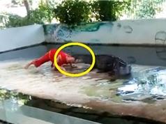 Clip: Nghệ sĩ biểu diễn xiếc bị cá cấu cắn vào đầu