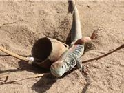 Clip: Tìm hiểu cách đặt bẫy bắt dông cát ở Phú Yên