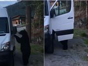Clip: Gấu đen biết mở cửa xe Mercedes như người gây hoang mang