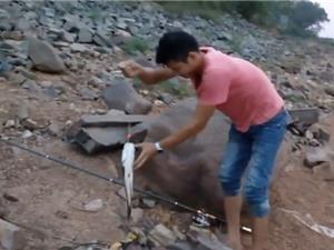 Clip: Cần thủ trổ tài câu cá lóc tại hồ Đại Lải, Vĩnh Phúc