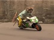 Clip: Khỉ biết đi xe máy, làm bồi bàn