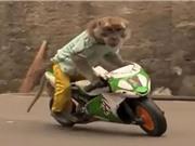 CLIP HOT NGÀY 23/6: Dính tai nạn thảm khốc vì chạy xe nhanh, khỉ trổ tài đi xe máy
