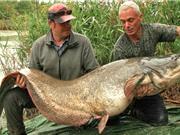 Clip: Câu được cá nheo châu Âu khổng lồ trên sông