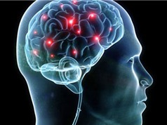 Động lực thúc đẩy con người phát triển bộ não lớn