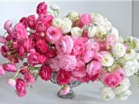 """Vẻ đẹp của loài hoa đang """"gây sốt"""" ở Việt Nam"""