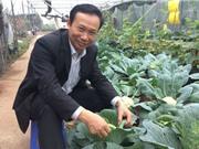 PGS-TS Đặng Văn Đông - Phó Viện trưởng Viện Nghiên cứu rau quả: Cần có thống kê để định hướng đầu tư