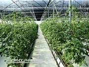 Một số đề tài nghiên cứu về nông nghiệp ứng dụng công nghệ cao