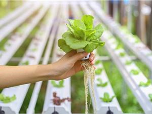 Ứng dụng công nghệ cao trong nông nghiệp: Nội địa hóa để có sản phẩm giá rẻ