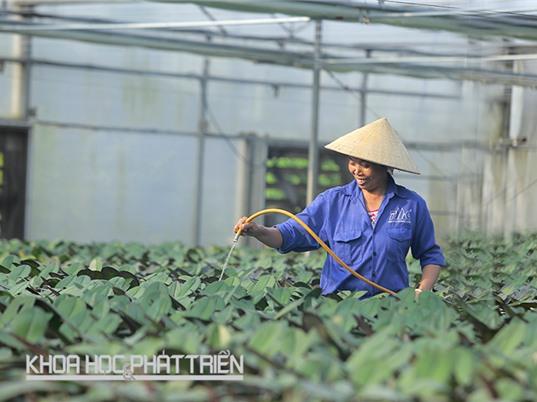 Vật tư sản xuất nông nghiệp ứng dụng công nghệ cao: Máng tưới, giá để cây cũng phải nhập khẩu