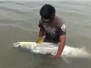 Clip: Câu được cá măng to như người trên hồ