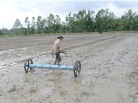 TS Nguyễn Văn Biếu: Có thể gieo sạ theo hiệu ứng hàng biên