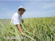 GS-TSKH Trần Duy Quý: Cần mạnh dạn ứng dụng những tiến bộ có lợi cho dân