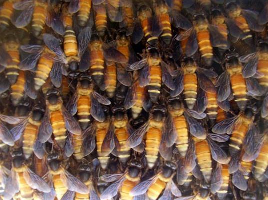 Ong di cư kéo đến trụ sở Liên Hợp Quốc làm mật