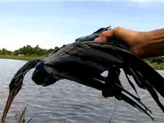 Clip: Dùng lưới đánh cá tóm gọn chim cổ rắn quý hiếm ở TPHCM
