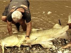 """Clip: Tóm gọn """"thủy quái"""" ăn thịt người trên sông Kali"""