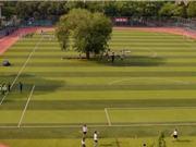 """Cây cổ thụ """"án ngữ"""" kỳ lạ giữa sân bóng trường học Trung Quốc"""