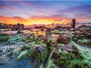 Bãi biển Cổ Thạch đẹp tựa tiên cảnh khi bị rêu phủ