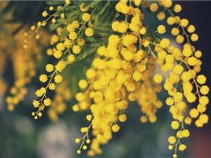 Chùm ảnh đẹp về loài hoa sinh ra từ sự hy sinh của tình yêu