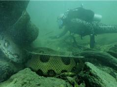 """Clip: """"Mặt đối mặt"""" với trăn Nam Mỹ khổng lồ ở dưới nước"""