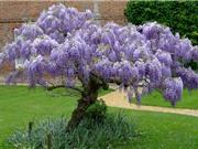 Vẻ mỹ miều của loài hoa đại diện cho tình yêu vĩnh cửu