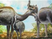 Loài thú từng làm cha đẻ của thuyết tiến hóa bối rối