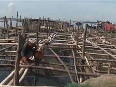 Thừa Thiên - Huế chủ động phòng chống dịch bệnh trên thủy sản