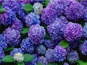 Vẻ đẹp của loài hoa tượng trưng cho sự thay đổi trong tình yêu