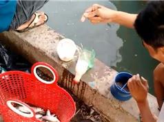 Clip: Bắt được cả giỏ cá chỉ bằng... chai nhựa