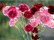 Ngắm vẻ đẹp của loài hoa được sủng ái nhất thời Hy Lạp cổ đại