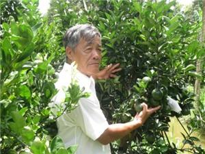 Bí quyết trồng cam sành đạt năng suất, chất lượng cao