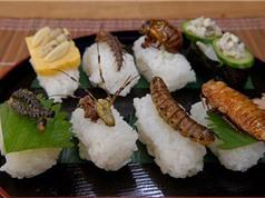 Giải quyết nạn khủng hoảng lương thực tương lai bằng côn trùng