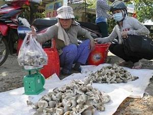 Quê nấm Phú Lương thoát nghèo