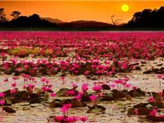 """Mê mệt trước những điểm du lịch """"hot"""" nhất Nam Trung Bộ"""