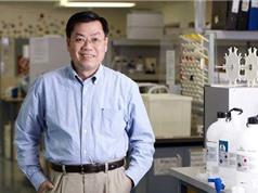 Giáo sư gốc Việt thành danh ở Australia