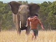 Clip: Liều mạng chọc tức voi hoang dã