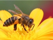 Não ong giúp cho ra thế hệ máy ảnh chụp đẹp hơn gấp nhiều lần
