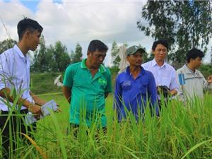 Long An: Hội thảo đầu bờ đánh giá giống lúa chịu phèn