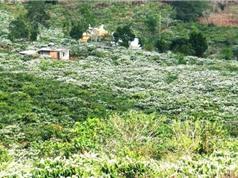 Chùm ảnh ấn tượng về thủ phủ cà phê của Việt Nam