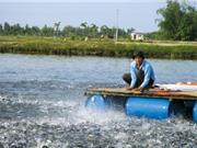 Nghệ An ứng dụng công nghệ mới nuôi thủy sản
