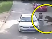 Clip: Hổ dữ bắt cô gái vừa bước xuống xe ôtô