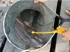 Clip: Trổ tài câu cá trê bằng cần câu đồ chơi