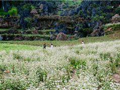 Những địa điểm du lịch hấp dẫn nhất mảnh đất địa đầu Tổ quốc