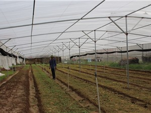 Gieo ươm rau giống lãi 400-500 triệu đồng/năm