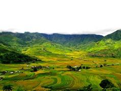 """""""Lạc bước"""" vào nơi có ruộng lúa đẹp nhất Mù Căng Chải"""