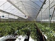 Ứng dụng nông nghiệp công nghệ cao ở Lâm Đồng: Sử dụng 60% kinh phí khoa học