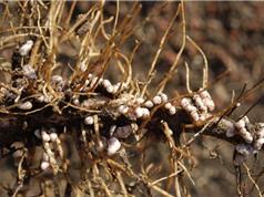 Luân canh, xen canh để tăng năng suất nông nghiệp hữu cơ